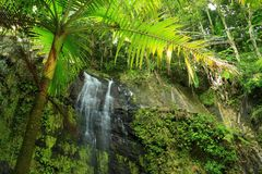 Palm Tree Waterfall Stock Images