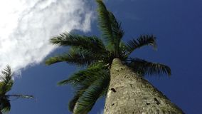 Palm Tree Waving in the Wind stock video footage