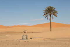 Palm tree and well. A palm tree and a well in the desert of Merzouga, Morocco Royalty Free Stock Photos