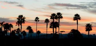 Palm Tree West Coast Tropical California Sunset Skyline Stock Photography