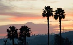 Palm Tree West Coast Tropical California Sunset Skyline Stock Photo