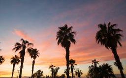 Palm Tree West Coast Tropical California Sunset Royalty Free Stock Image