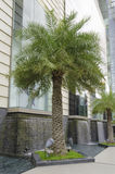 Palm Tree where is outside facade of a modern shopping centre in Bangkok Royalty Free Stock Photo