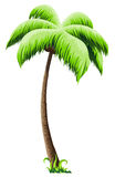 Palm tree. On a white background vector illustration