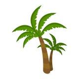 Palm Tree  on White Background. Arecaceae Royalty Free Stock Photos