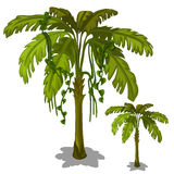Palm tree on a white background. Vector Royalty Free Stock Photography