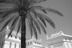 Palm tree and white colonial buildings in Cadiz. Spain Royalty Free Stock Photo
