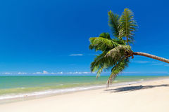 Palm tree on white sand beach Stock Photo