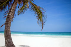 Palm tree and white sand beach. A palm tree on a white sand beach in Mexico Stock Image