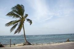 Palm tree on white sand beach. Stock Photo