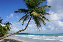 Paradise beach at Martinique in the caribbean ocean stock images