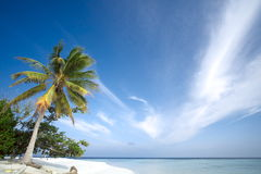 Palm tree, white sand beach, ocean and blue sky Royalty Free Stock Image