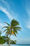 Palm tree, white sand beach, ocean and blue sky Royalty Free Stock Photo