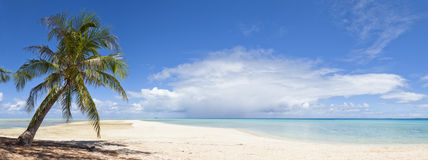 Palm tree and white sand beach panoramic view. A loneliness palm tree on white sand beach front of a blue lagoon of a paradise island Stock Photo