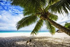 Palm tree,white sand,turquoise water at tropical beach,paradise. A palm tree,white sand,turquoise water at a beautiful tropical beach. paradise at the seychelles Stock Photos