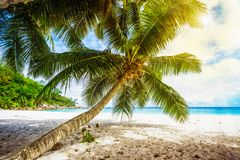 Palm tree,white sand,turquoise water at tropical beach,paradise stock images