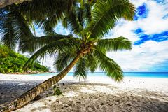 Palm tree,white sand,turquoise water at tropical beach,paradise. A palm tree,white sand,turquoise water at a beautiful tropical beach. paradise at the seychelles Stock Photography