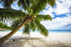 Palm tree,white sand,turquoise water at tropical beach,paradise. A palm tree,white sand,turquoise water at a beautiful tropical beach. paradise at the seychelles Royalty Free Stock Images