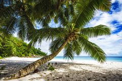 Palm tree,white sand,turquoise water at tropical beach,paradise. A palm tree,white sand,turquoise water at a beautiful tropical beach. paradise at the seychelles Royalty Free Stock Photos