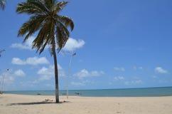 Palm tree at white sandy beach, Cumbuco, Brazil. Paradise - palm tree at endless white sandy beach, Cumbuco Brazil Royalty Free Stock Photos