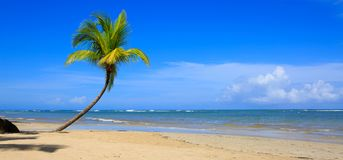 Palm tree on white tropical beach. Travel background. Royalty Free Stock Photo