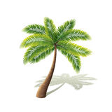 Palm tree on white vector vector illustration