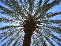 Palm tree, wiew from below Stock Photos
