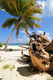 Palm tree on wild tropical beach Stock Image