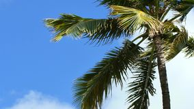 Palm tree in the wind 4k video stock video footage