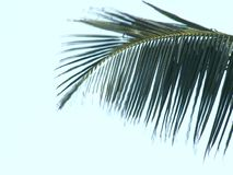 Palm tree on a wind stock video footage