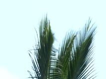 Palm tree on a wind stock video