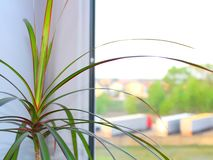 Palm tree on the windowsill, spring stock photography