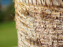 Palm tree wood bark natural texture background. Stock Photo