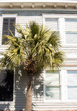 Palm Tree by Wood Siding Home Stock Image