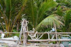 Palm tree by wooden fence. Samui island, Thailand Stock Photos