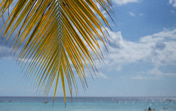 A palm tree Royalty Free Stock Photography