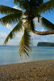 Palm Tree on Ypao Beach, Guam. Palm tree curving out over Ypao beach, Guam, USA. Two Lovers point in background Royalty Free Stock Images