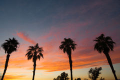 Palm Treee West Coast Tropical California Sunset Stock Photography