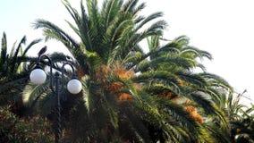 Palm trees. природа nature, гармония harmony, relax, recreation, tropics bananas summer Royalty Free Stock Image