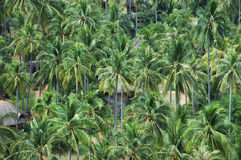 Palm trees. And bungalows in Thailand Stock Image