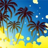 Palm Trees Stock Image