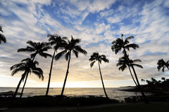Palm trees. In Hawaii at dusk Royalty Free Stock Image