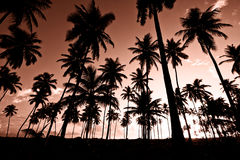 Palm trees. Palm tree forest at the beach royalty free stock photos
