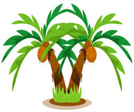 Palm trees. Illustration of isolated palm trees with coconut on white background stock illustration
