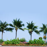 Palm Trees. And Flowers with Blue Sky Royalty Free Stock Photos