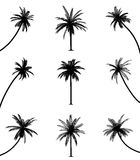 Palm trees. On isolated white background. EPS file available Stock Photos