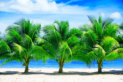 Palm trees Stock Images