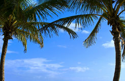 Palm Trees. Frame a beautiful blue sky on a tropical island Royalty Free Stock Photography