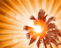 Palm trees. Illustration background Stock Images