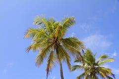 Palm Trees Royalty Free Stock Photo